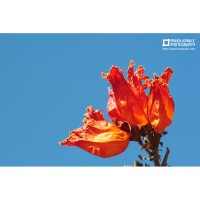 ORANGE FLOWER AGAINST BLUE SKY